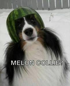 My melon-collie baby