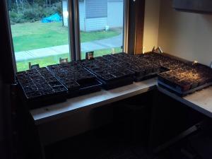 2014 tomato farm