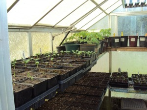 The not so ILP Greenhouse