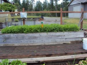 2014-06-29 14.03.58 carrots