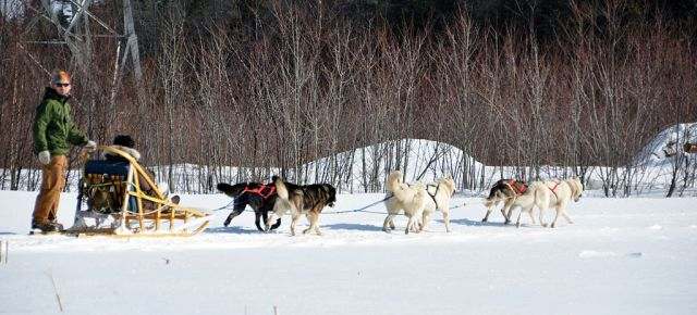 Dog_sled_quebec_2010