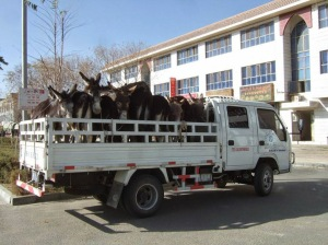 Picture taken outside the Capitol of disgruntled donkeys leaving the Senate last week