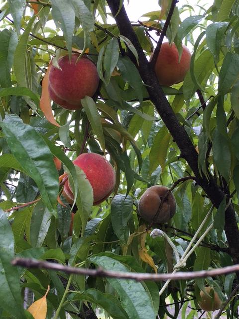 Peach problems